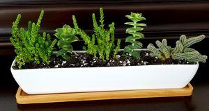Succulent Garden for Sale in Suwanee, GA