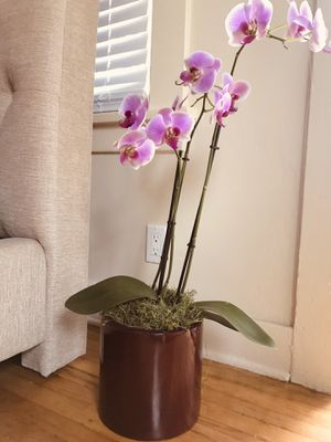 Plants for sale. Wholesale or individual for Sale in Culver City, CA