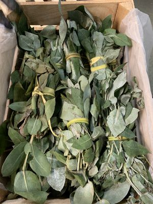 Eucalipto & pitayas for Sale in Jessup, MD