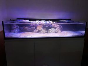 Reef Tank for Sale in Chantilly, VA