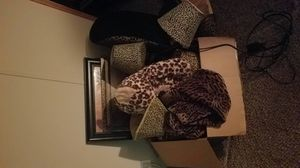 Leopard collection for Sale in Richmond, KY