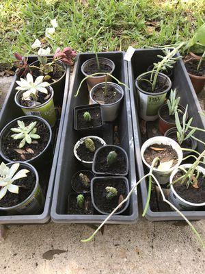 Plants for Sale in Altamonte Springs, FL