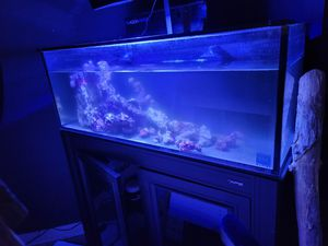 Fully cycled and brand new ABS saltwater tank w/ HOB skimmer and redsea LED for Sale in Oakland, CA