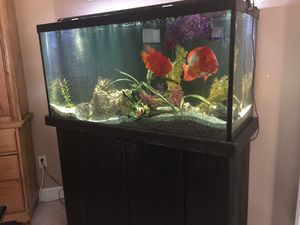 90 gallon fish tank with two big cicklids and a big placko with wood stand and filter for free to anyone who will break the tank down and take it away for Sale in Boca Raton, FL