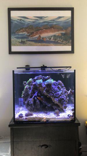 50 gallon rimless cube aquarium with trigger 20 sump for Sale in Casselberry, FL