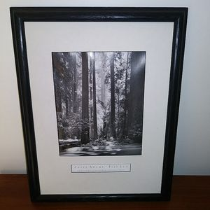 "Ansel Adams Photography Print - ""Redwoods"" for Sale in Springfield, MA"