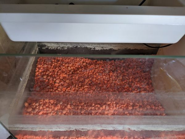 5 gallon aquaponic system