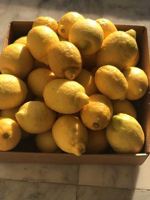 Lemons for sale for Sale in Walnut, CA