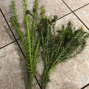 Fake Plant Stems for Sale in Tampa, FL