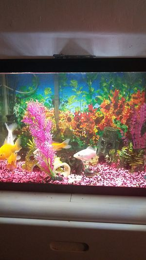 20 gallon fish tank with 5 fish. 50 gallin filter heater air bubbler plants for Sale in Salt Lake City, UT
