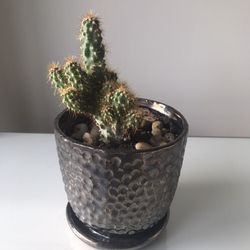 Cactus /succulent for Sale in Alexandria,  VA