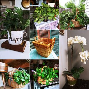 Decor trees & plants. Check out my offers! 10$- 25$ for Sale in Joliet, IL