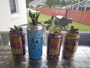 Canned succulents for Sale in Groveland, FL