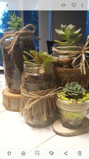 Two bundlles of succulent arrangements for Sale in Reedley, CA
