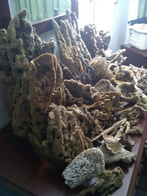 Natural sea sponge 100 for all obo...will sale separately. for Sale in Tallahassee, FL