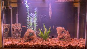 Aquarium, 45 gallon + supplies for Sale in Boca Raton, FL