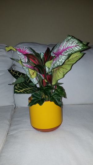 Plant Arrangement in Yellow Pot Vase for Sale in Dallas, TX