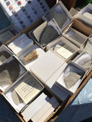 Fossils for Sale in San Diego, CA