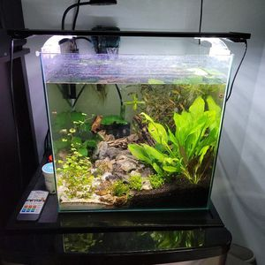14 Gallon Rimless Pee Puffer Aquarium Fish Tank With Everything Included for Sale in Seattle, WA