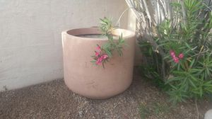 Extra large plant flower tree pot for Sale in Litchfield Park, AZ