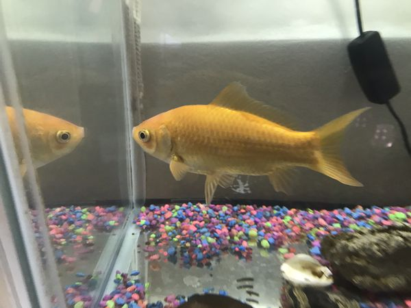 Aquarium Includes: 3 Fish, Food, Small Table, Filters, 2 Black Fish Are The Fish Tank Cleaners . Asking $45.00 For Everything