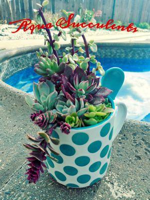 Succulent Arrangement for Sale in City of Industry, CA