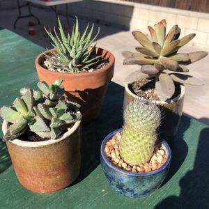 Succulents For Sale for Sale in Newport Beach, CA