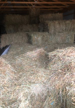 Hay for Sale in Dagsboro, DE