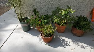 Plants in pots for Sale in Redlands, CA
