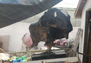 Toro mecanico for Sale in Phoenix, AZ