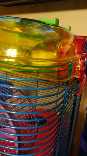 Hamster baby girl for Sale in Montgomery, AL