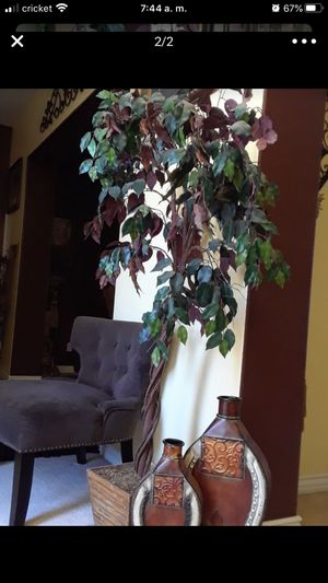 Beautiful plant tree for Sale in Moreno Valley, CA