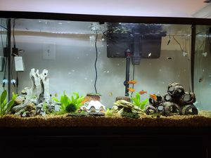 60 gallon fish tank setup for Sale in South Riding, VA