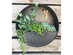 """Wild Green Fingers Rustic Round 12"""" hanging wall planter for herbs, succulents & cacti for Sale in Victorville, CA"""