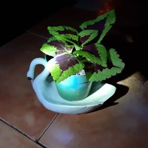 Swan Plant Saucer for Sale in Fort Lauderdale, FL