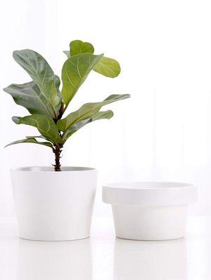 White Ceramic Flower Pot, Modern Planter, Ceramic Plant Pots, Plant Pot, Modern Planter Planting Pots, Succulent Pot, Pot for Plants, Rare Canary for Sale in Sacramento, CA