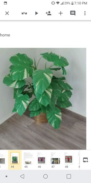 Silk Plant With Pot for Sale in Rochester Hills, MI