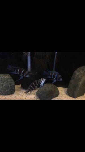 Fish tank aquarium for Sale in Fontana, CA