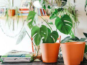 Complete Indoor Garden Setup for Sale in San Jose, CA