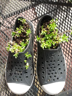 50% OFF Garden Shoe Planters for Sale in Madison Heights, MI