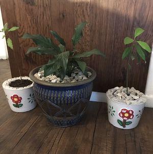 Plantas for Sale in Dallas, TX