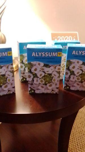 Alyssum for Sale in RAISINVL Township, MI