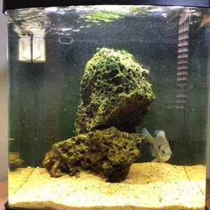 16 GALLON FISH TANK!!! for Sale in Clovis, CA