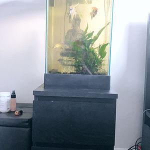 15g Fish Tank +Fish Spent Over $300 for Sale in Beverly Hills, CA