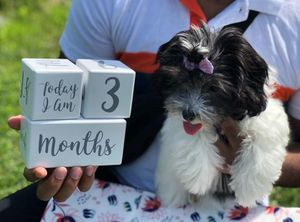 Celebrate With Your Pet Baby in Every Way! for Sale in Frederick, MD