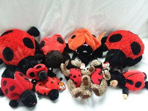 10 Clean Ladybugs for Sale in West York, PA