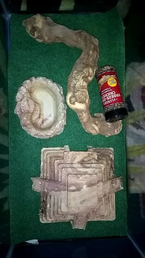 Reptile Bundle for Sale in Houston, TX