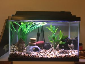 10 gallon fish tank aquarium with 2 Cory catfish for Sale in Vista, CA