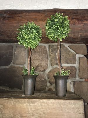 2 Topiaries for Sale in Littleton, CO