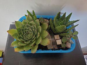 Succulents for Sale in West Jordan, UT